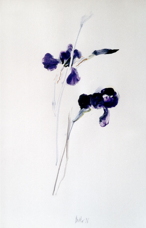 fleurs-bistes-6