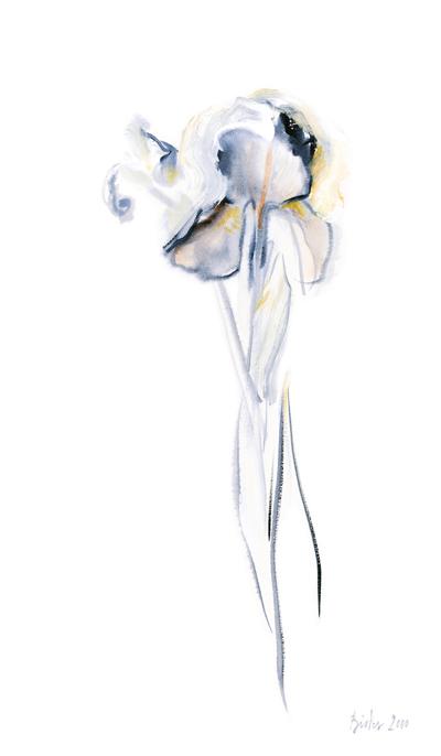 iris-sacre-bistes